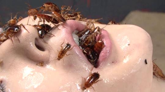 porno com amatør insekt