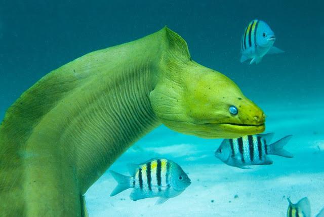 Beautiful Sea Creatures