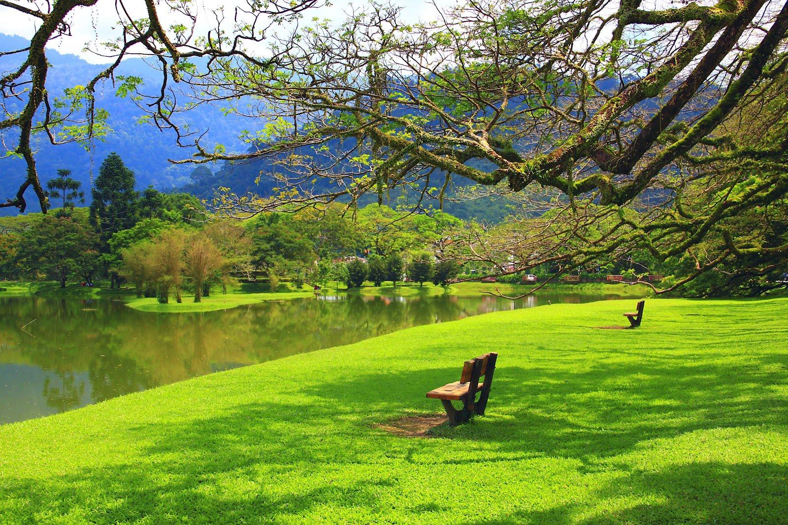 Banco de imagenes un paseo por el jard n del lago en - Arboles bonitos para jardin ...