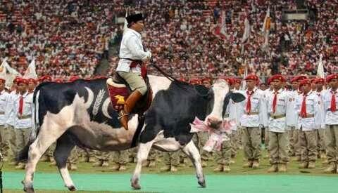 Prabowo Naik Sapi PKS