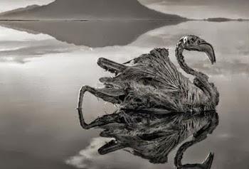 Η λίμνη του θανάτου, που ότι την ακουμπάει του