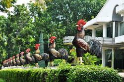 Deretan ayam jago di depan Museum Rekor Indonesia MURI Semarang