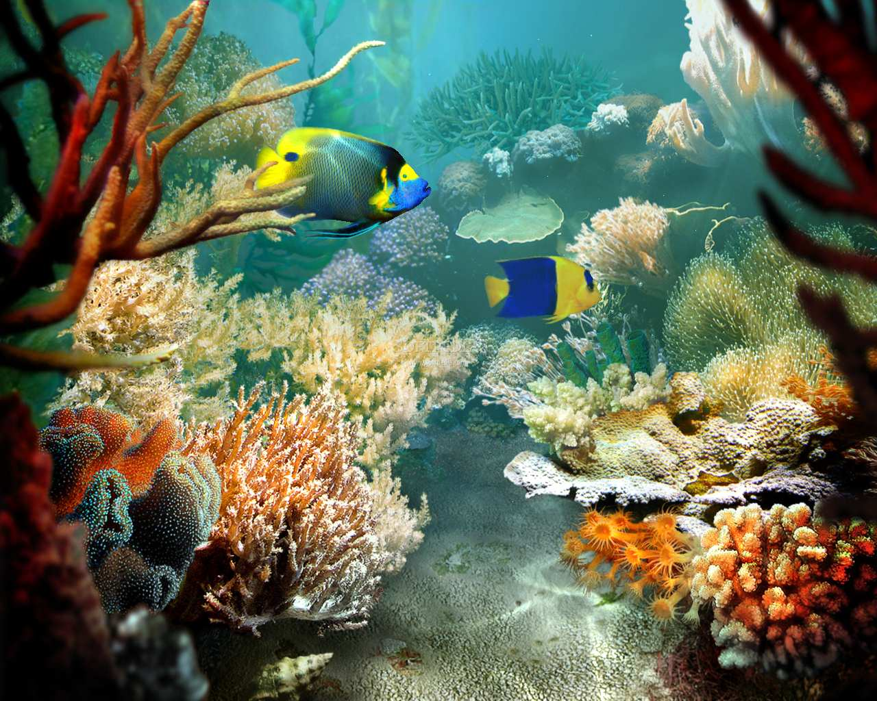 Fish pictures tropical fish for Exotic fish tanks
