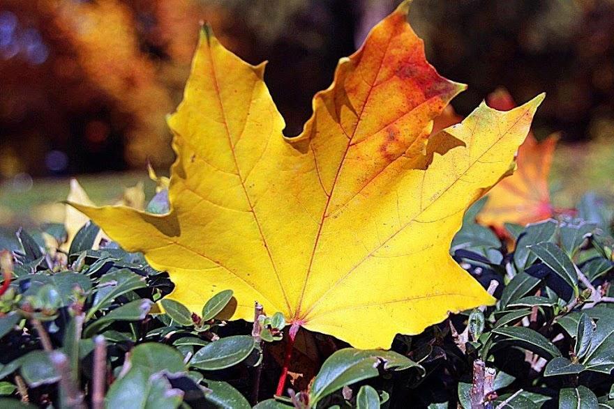 Herbst im Brentanopark