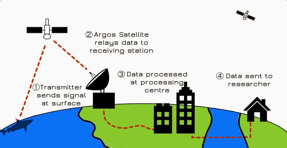 Oceansiq  Tracking Marine Animals With Satellites