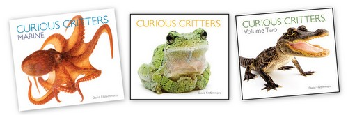 curious critters book review