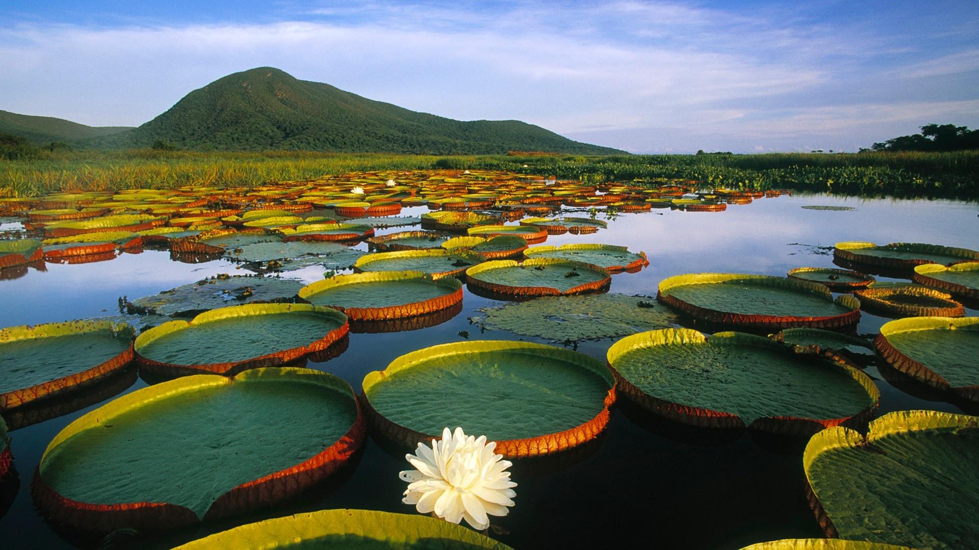 http://3.bp.blogspot.com/-oJmUyFcYwk8/UG6EyZrnDJI/AAAAAAAALZk/WRKydD4zUDU/s0/water-lilies-2-1920x1080.jpg