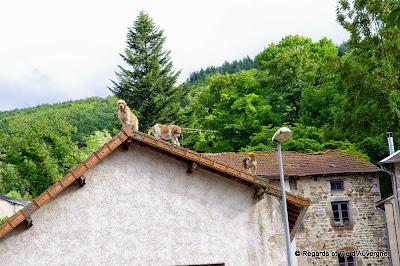 Ferrières-sur-Sichon, Allier, Auvergne