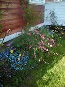 Blomster i flor