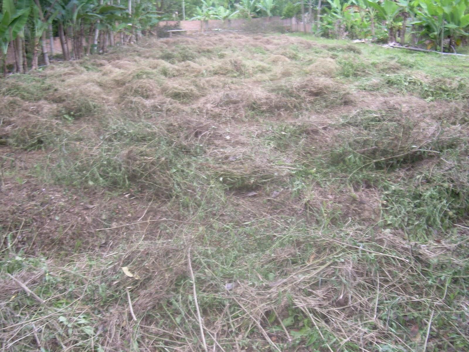 Perumahan MELAYU INDAH PERMAI Residence: Pembersihan Lahan