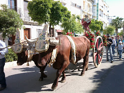 Romería 2011