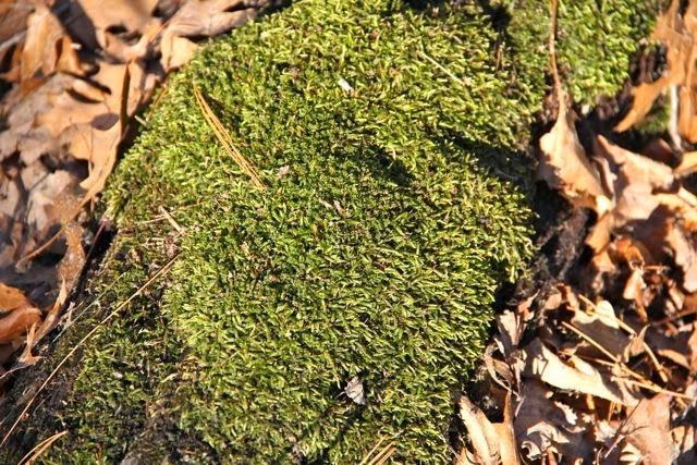 moss growing on fallen tree trunk