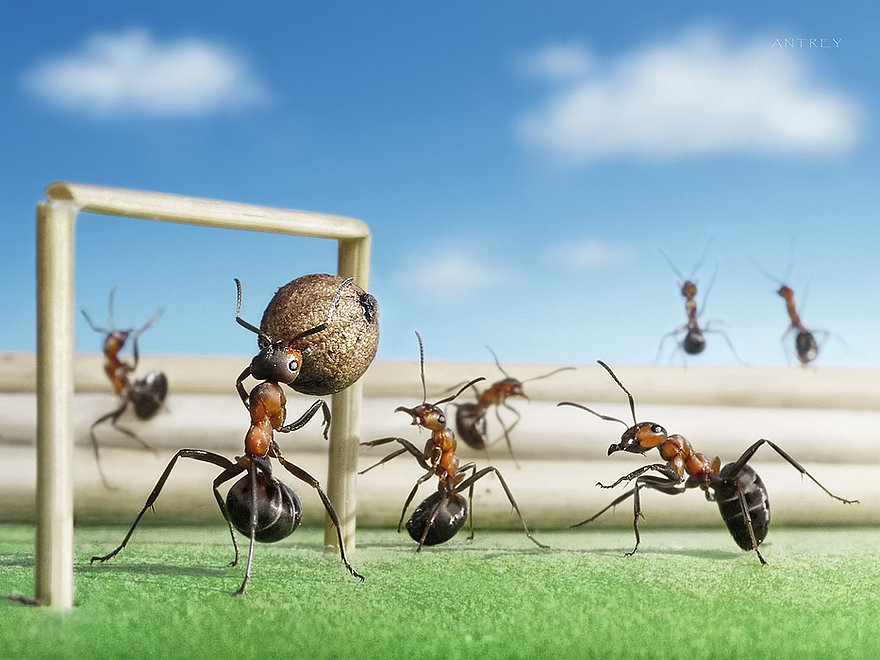 11-Soccer-Football-Game-Andrey-Pavlov-Photographs-of-Ants-an-Affordable-Journey-to-a-Parallel-World