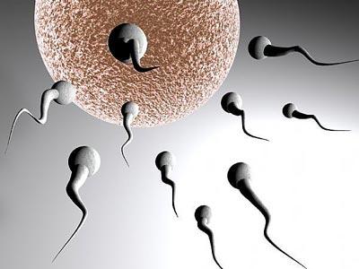 Làm đẹp bằng tinh trùng có lợi hay có hại ?