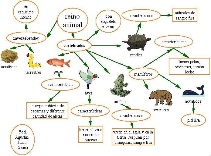Album animales vertebrados e invertebrados - Imagui