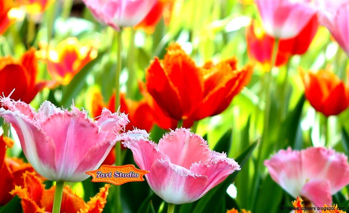 spring flowers screensavers - photo #29