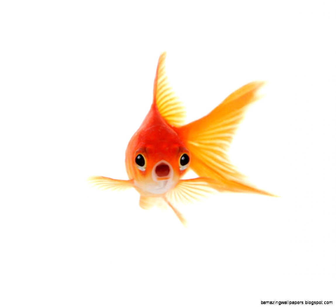 Top 10 Tales of Terrified Goldfish