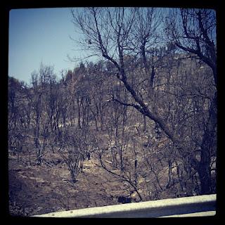 Apagades les flames, conviurem durant anys amb les cendres del foc de l'Alt Empordà
