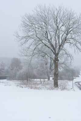 Träd med rimfrost i vinterlandskap. foto: Reb Dutius