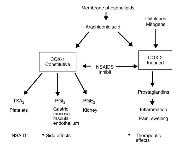 Bagan Mekanisme aksi / Cara Kerja Natrium diklofenak natrium diclofenac sodium diclofenac sodium diklofenak