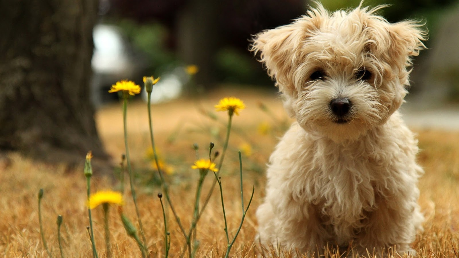 HD Wallpapers Fine: cute dog | baby dog hd wallpapers free ...