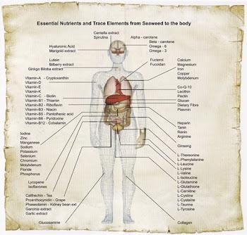 setiap keperluan nutrisi dalam badan manusia datang dari pure super premium marine collagen