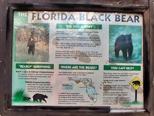 Hinweis auf Schwarzbären im Big Cypress Bend Boardwalk, Everglades Florida USA