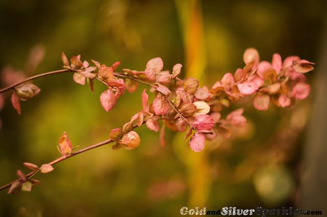 flower, plant, garden, pink plant