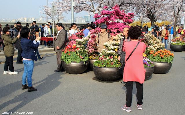 Coreanos tomándose fotos delante de flores