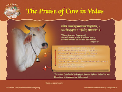 uses of cow
