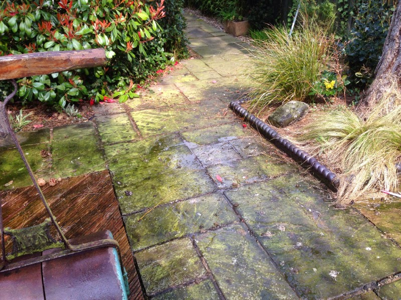 sandstone patio cleaning cambridge