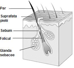 Glandele sebacee, factorii de risc si tratamentul sebumului