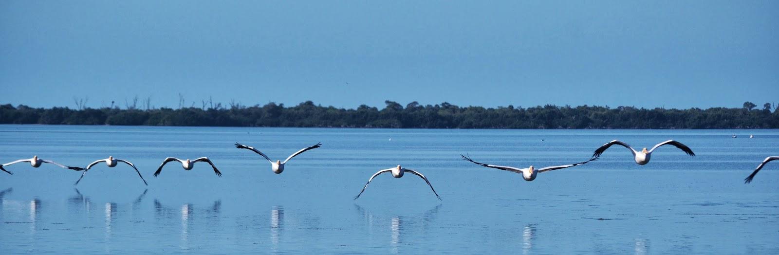 Pine Island Florida Weather January