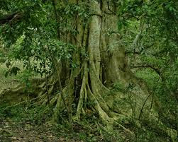 Trees Photos