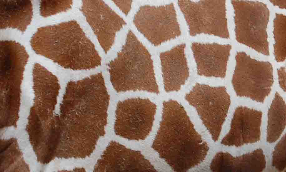 Real Giraffe Print Www Pixshark Com Images Galleries