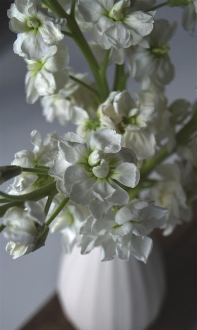 Um jardim para cuidar: Para um verão mais florido ! as