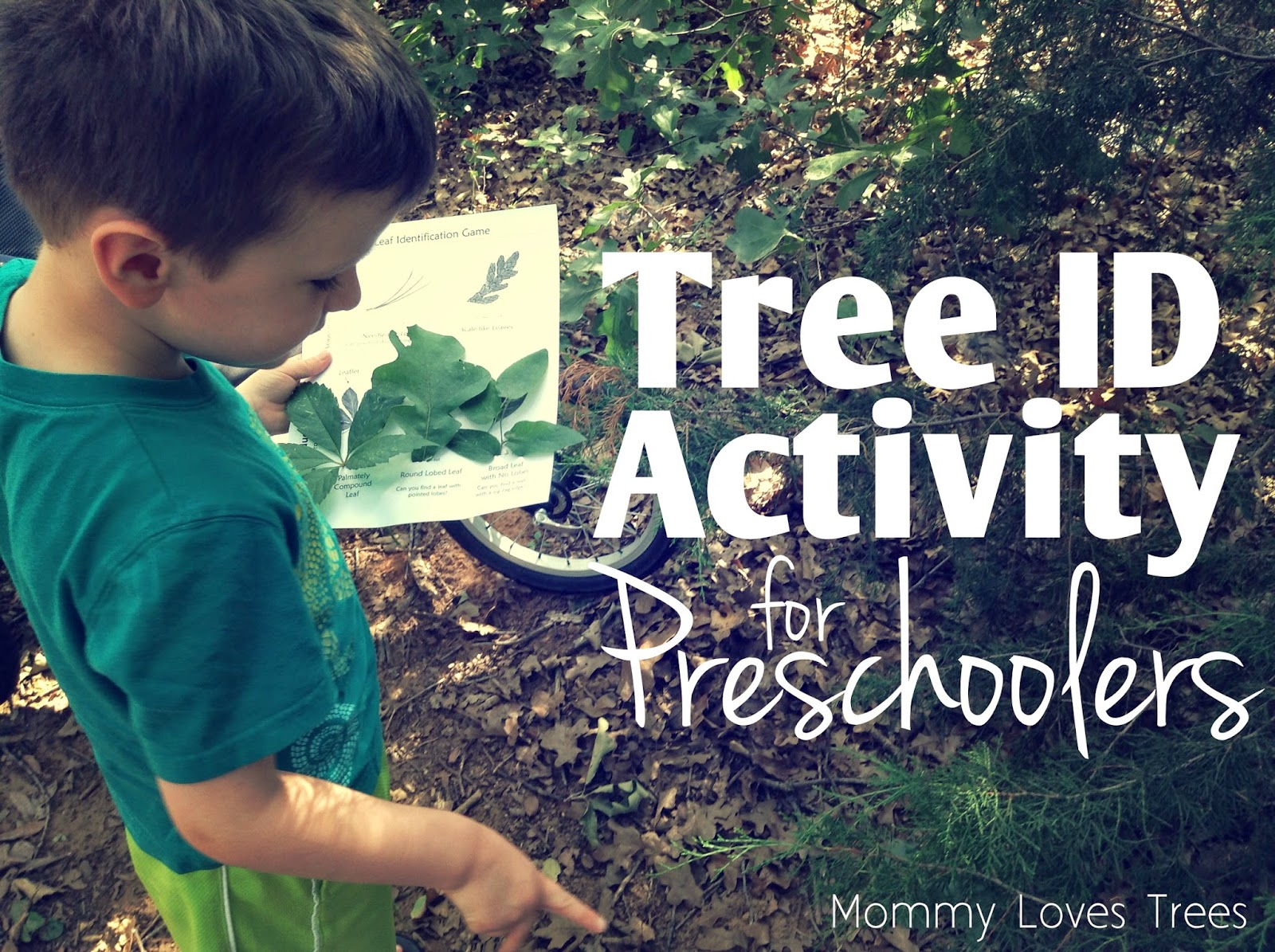 Tree Identification Activity for Preschoolers (free printable)