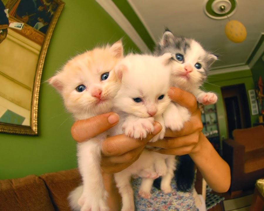 The Cutest Kitten Family on Earth