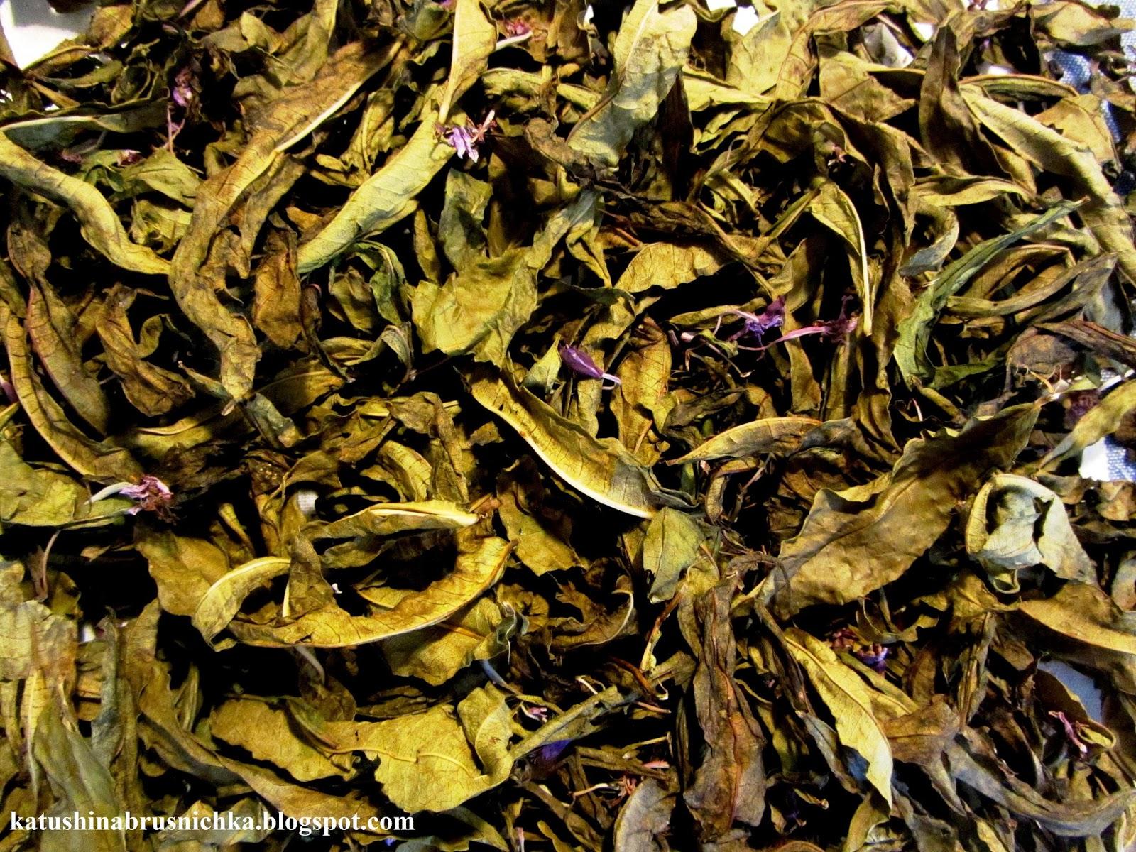 Ферментация иван-чая в домашних условиях 67