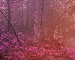 Juegos de Escape Fog Forest Escape