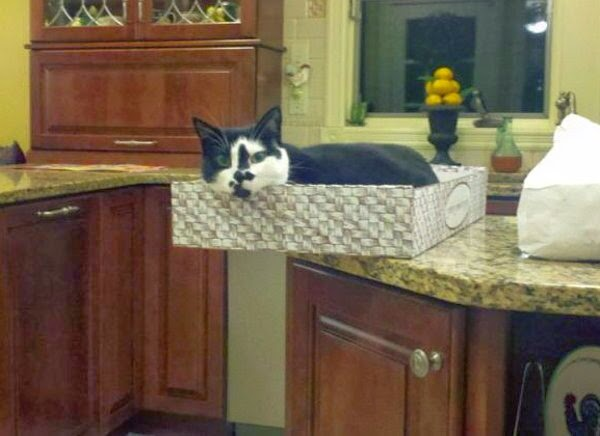 Funny cats - part 95 (40 pics + 10 gifs), cat pictures, cats don't gravitate