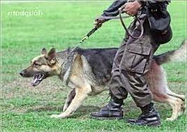 Jenis Anjing Pelacak