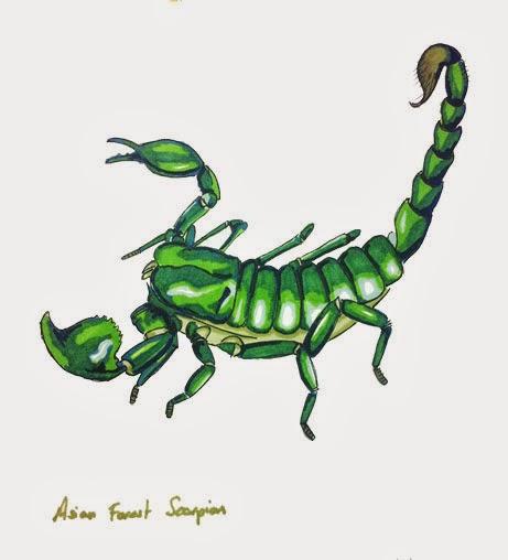 Illustrated menagerie scorpions