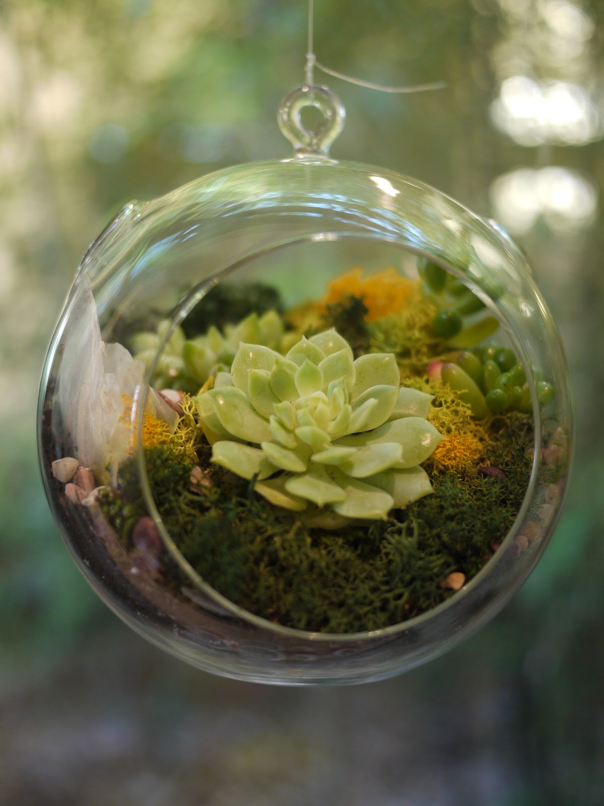 little hiccups hanging succulent terrarium workshop. Black Bedroom Furniture Sets. Home Design Ideas