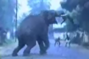 angry, elephant, attacking, man, animals