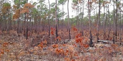 Incendio en bosques de Abaco5