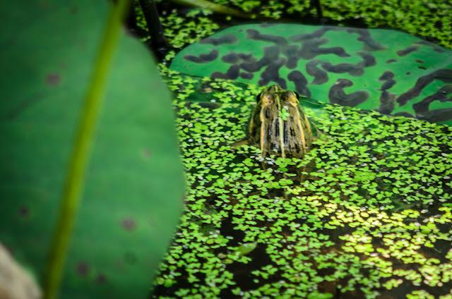 Frog Pohang South Korea