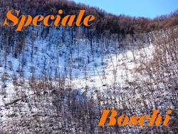 Speciale Boschi