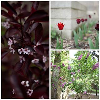 UAlberta in Bloom