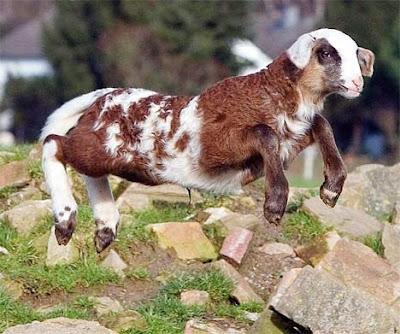 Animales hibridos reales. Increible